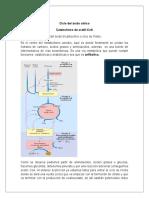 RESUMEN CICLO DEL ACIDO CITRICO.docx