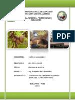 Informe Final de Cultivos Industriales i Practicas