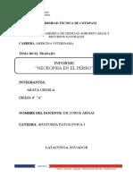 Informe Necropsia Del Perro