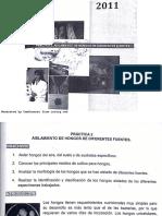 MICROBIOLOGIA 2. AISLAMIENTO DE HONGOS.FES ZARAGOZA