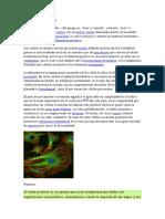 Celula Eucariota Segundo Básico