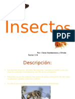 2010 1ºA CLARA Y OLINDA insectos!