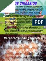2010 1ºA FATIMA LOS CNIDARIOS