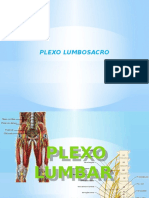 plexolumbosacroprofe-copia-150526004026-lva1-app6892.pptx