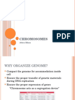 Lecture 1- Chromosome & Genome
