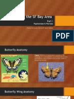 papillionidae 1