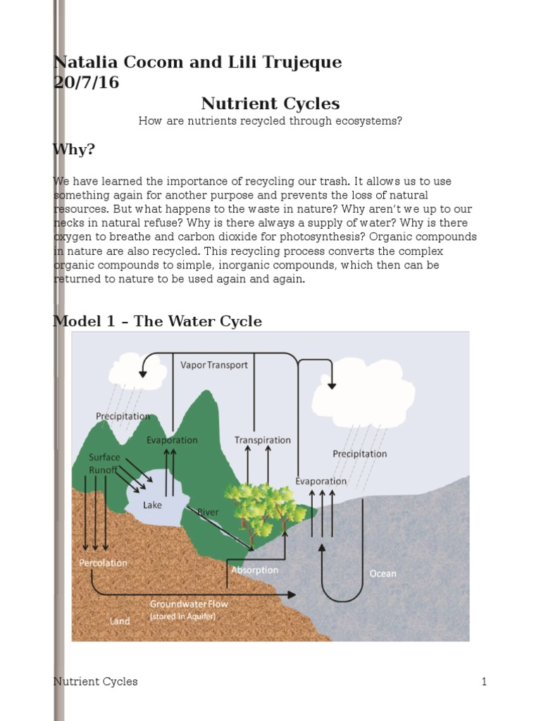 nutrient cycles pogilnatalia Carbon Dioxide – Nutrient Cycle Worksheet