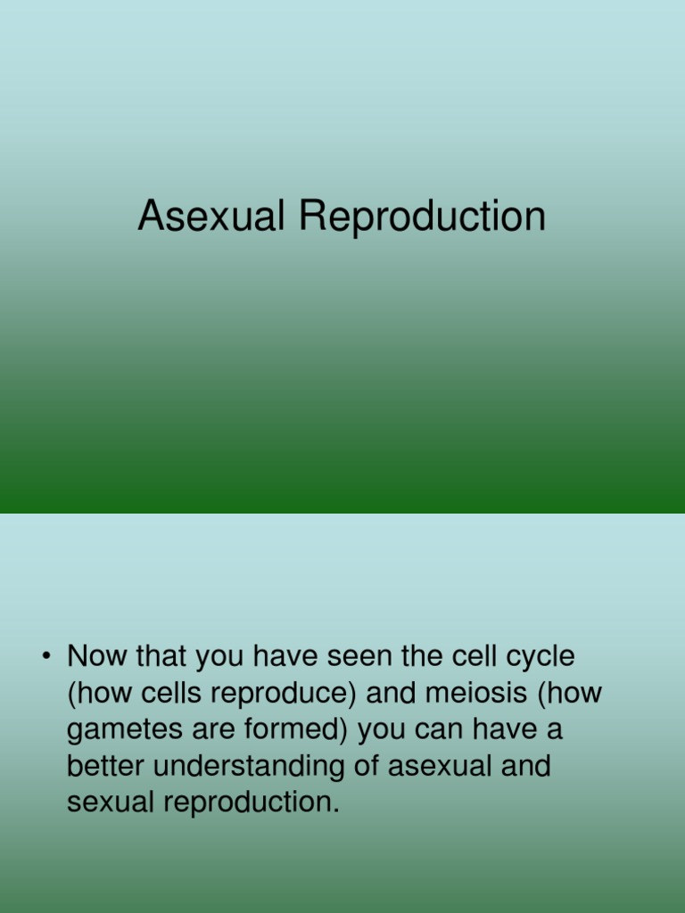 Asexual reproduction in hydra wikipedia deutsch