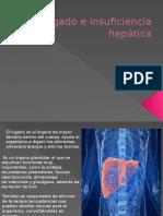 Hígado e Insuficiencia Hepática