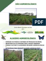 Algodão agroecológico (1)