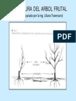 S1-Estructura Del Arbol Frutal