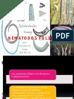 NEMÁTODOS FOLIARES