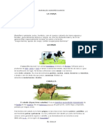 Animales Agropecuarios