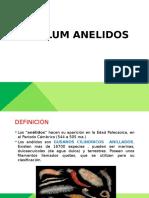 Phylum Anelidos