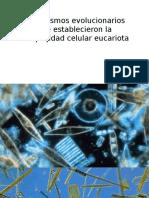 Mecanismos Evolucionarios Que Establecieron La Complejidad Celular Eucariota