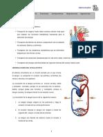 aparato-circulatorio.pdf