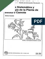 Botanica Camote