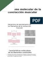 Mecanismo General de La Contracción Muscular