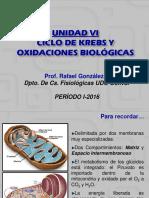 1-2016 TEMA 6. CICLO DE KREBS.pdf