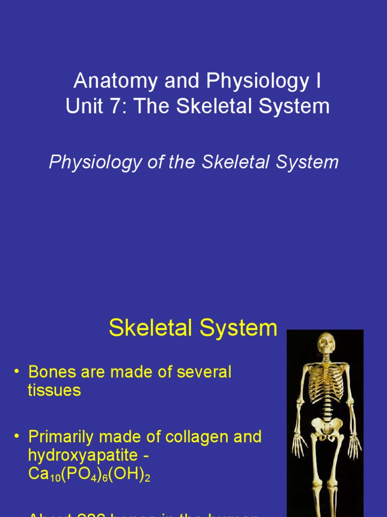 Anatomy Unit 7 - Physiology of the Skeletal System | Bone | Skeleton