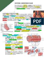3. Sistema Cardiovascular