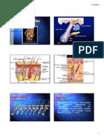 terapia capilar.pdf