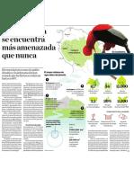 Bosque Amazonico en Cifras