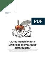 2011_2012_Cruces_Monohibridos_y_Dihibrid.pdf