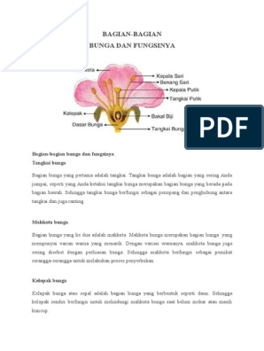 Bagian Bagian Bunga Kembang Sepatu Dan Fungsinya Berbagai Bagian Penting