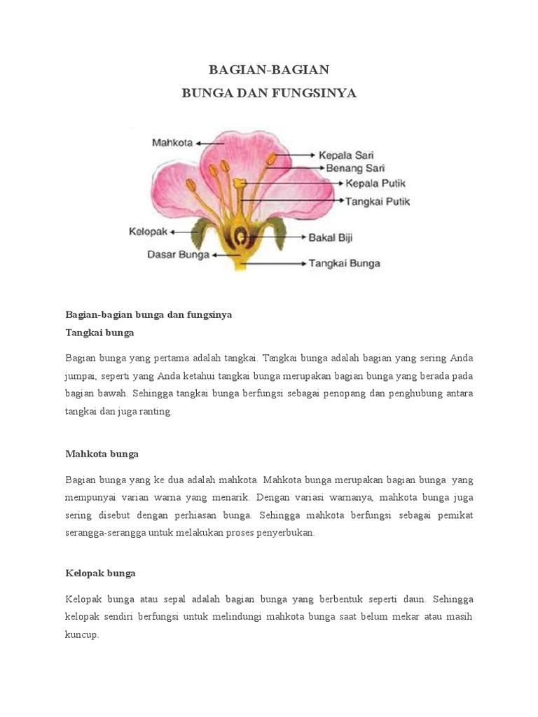 Bagian Bunga Dan Fungsinya Beserta Gambar Berbagai Bagian Penting