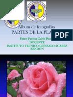 Álbum de fotografías flores.pdf