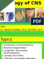 PA Neuropatologi 2012 - Dr. Cahyono