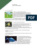 Clasificación de los vertebrados.docx