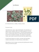 Verdolaga (Portulaca Oleracea).docx