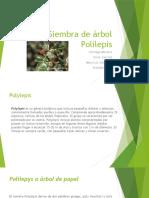 Siembra de Árbol Polilepis