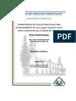 Transferencia de Suelos Forestales Para Establecimiento de Pinus Greggii en El Suelo de La Región de Texcoco