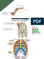 Huesos y Articulaciones del cuerpo humano