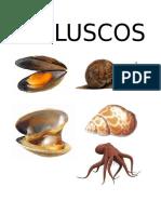 INVERTEBRADOS LAMINAS docx