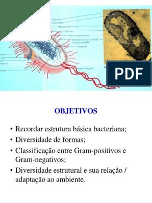 Estrutura Bacteriana Bactérias Membrana Celular