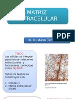 Tema 9 Matriz Extracelular(0)