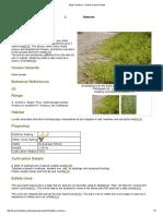 Batis maritima - Useful Tropical Plants.pdf