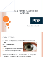 Uvea y Flujo Sanguineo Ocular