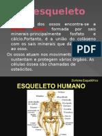 O Esqueleto