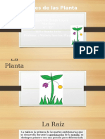 Partes de Las Planta FIORELLA