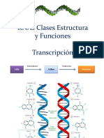 RNAs TRanscripción