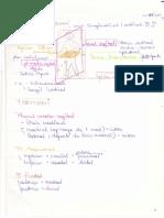 cursurile de Anatomie Ale Doctorului Niculescu Topografie an I MG