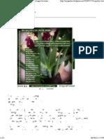 Aloe Vera - Medicinal Uses