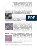 TIPOS DE TEJIDO ANIMAL EPILETIAL CONJUNTIVO NERVIOSO MUSCULAR DONDUCTOR CARDIACO SANGUINEO LINFATICO.docx