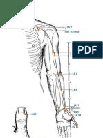 (LU) Meridiano del Pulmón - Funciones de punto de gráfico.pdf