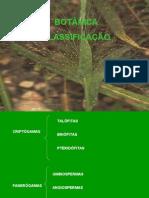 Biologia PPT - Botânica1